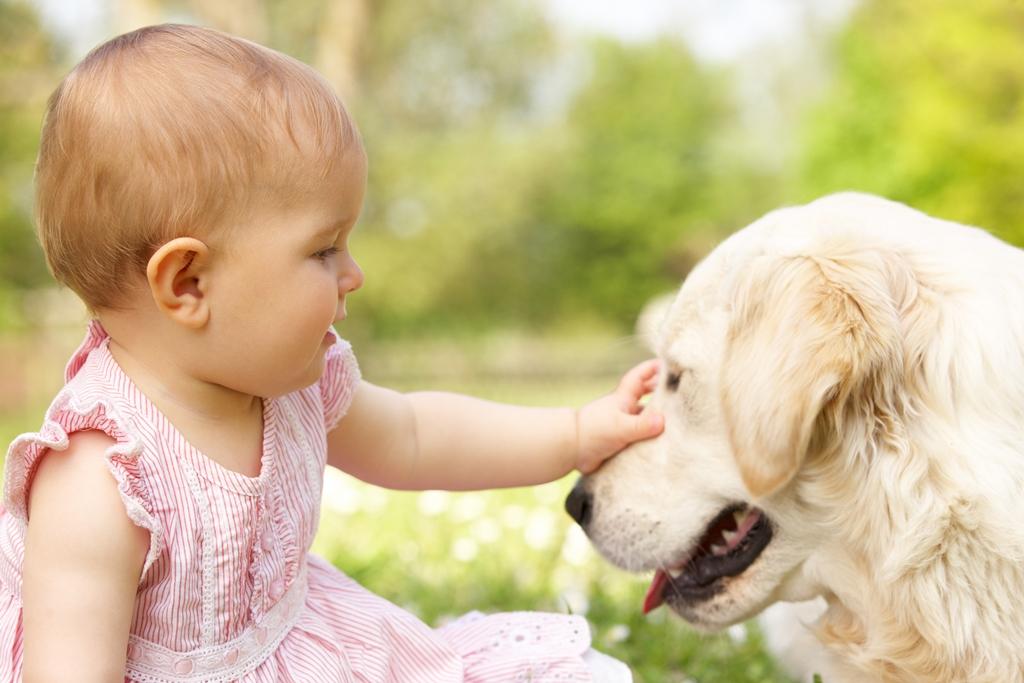 """ענבלתנועה   כיצד החזקה של חיית מחמד תשפר את בריאותו של ילדך, מאת: ד""""ר שיר שנק, רופאה וטרינרית BSc, D.V.M"""